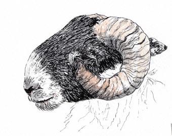 Scottish sheep postcard, Isle of Skye