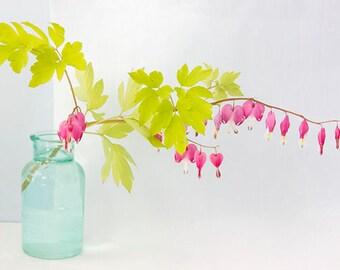 Bleeding Heart Print, Pink, Chartreuse, Turquoise Wall Art, Flower Still Life Photography