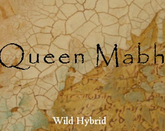 Queen Mabh Perfume Oil - 5ml Grey musk, pear, sweet gale and sweet clover.