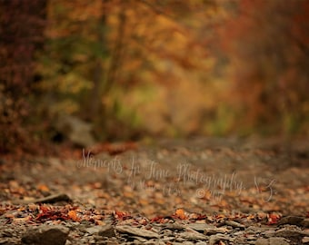 MIT Fall Autumn Forest Digital Backdrop