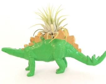 Small Light Green & Gold Dinosaur Planter with Ionantha Air Plant / Valentine's Gift  Home Decor / Dinosaur Planter