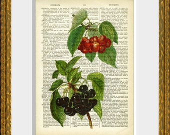 CHERRIES recycled book page art print - an antique dictionary page with a retooled antique fruit illustration - upcycled kitchen vintage