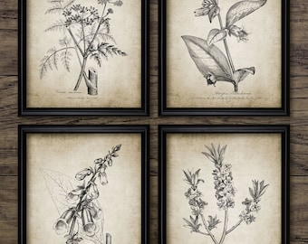 Antique Botanical Print Set of 4 - Plant Botanical Art Decor - Digital Art - Printable Art - Set Of Four Prints #190 - INSTANT DOWNLOAD
