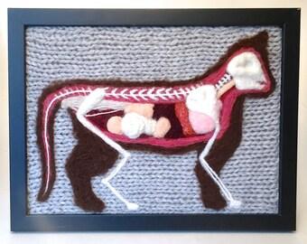 Feline Anatomical Model: A Study in Wool