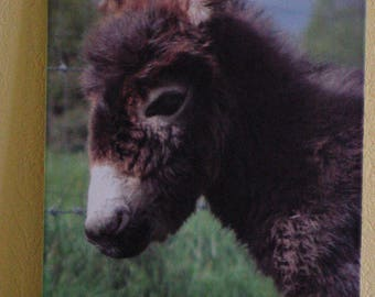 Picture on cotton canvas young donkey 30 x 40 cm