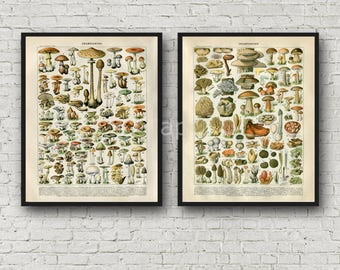 INSTANT DOWNLOAD Botanical Mushrooms 2 Poster Print Set 16x20 Late 1800s Repro Larousse
