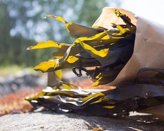 Wild handpicked sundried KELP / KOMBU aka lot. laminaria digitata - Genuine - 50g