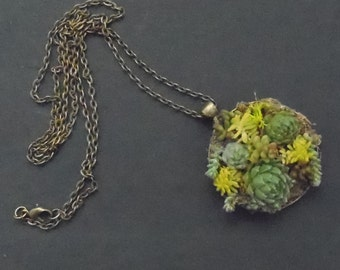 Living Succulent Pendant, Necklace
