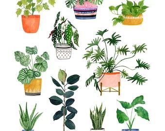 Pflanzenwand - Archiv Print von Lindsay Gardner