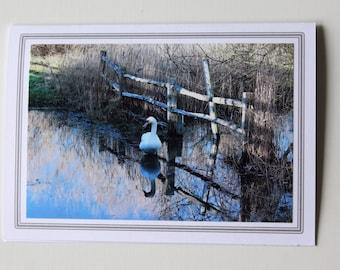 Photo greetings card - Swan photo card -