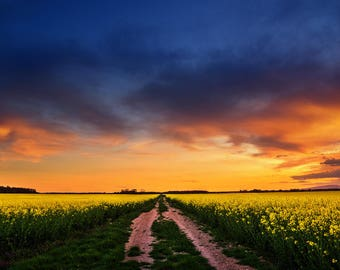 "Sunset photography canola field landscape poster print - nature photo - wall art - ""The Luminous Landscape XXIV"" by Zsolt Zsigmond - SKU0091"