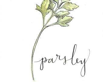 Parsley Watercolor