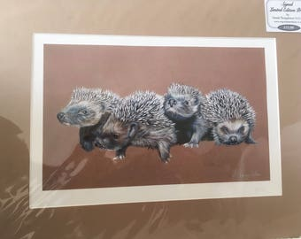 Signed Limited Edition Mounted Print- Hedgehogs