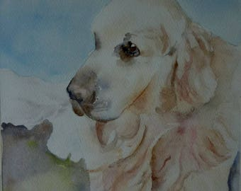 watercolor of my dog a golden retriever, a love of tenderness
