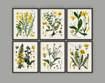 Yellow Flowers Print Set Of 6 - Vintage Yellow Flower Art - Floral Yellow Decor - Yellow Flower Botanical Art - Yellow Nursery Decor AB525