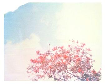 "Photography Polaroid Orange Flowers Clouds Sky Puerto Rico Matt Schwartz Print 8""x10"""