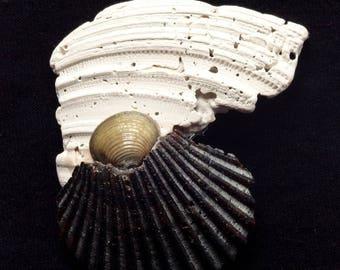 Neocon Shell Pin sessantasei