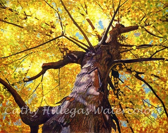 Autumn Tree Art Watercolor Painting print, Cathy Hillegas, 16x22, watercolor print, yellow, orange, red, green, purple, brown, maple tree