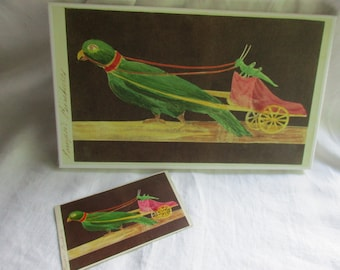 Vintage Italian Parrot CDV with Giclee