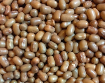 Matki Beans are Great for Sprouts and Protein