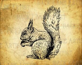 Squirrel Clipart Illustration Instant Download PNG JPG Digi Line Art Image Drawing L370