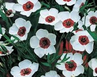 Flax- Bright Eyes- Linum - 200 seeds