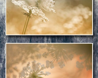 Wildnature photography, set of 2 photo prints, queen anne's lace photography, yellow cream gold wall decor prints, botanical prints set