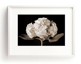 Hydrangea Print, Floral Wall Art, Black and White Print, Flower Photography, Nature Print, Large Flower Print, Botanical Art, Large Wall Art