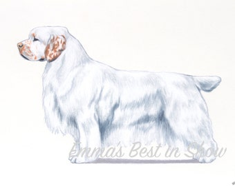 Clumber Spaniel Dog - Archival Fine Art Print - AKC Best in Show Champion - Breed Standard - Sporting Group - Original Art Print