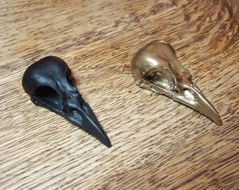 Crow skull resin cast - black or gold. oddity - curiosity - taxidermy -