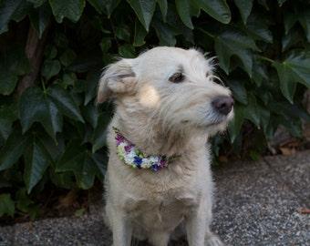 Flower dog collar wedding collar wedding flowers