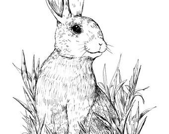 Sitting Rabbit - Art Print