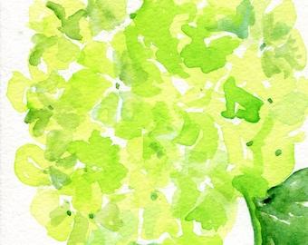 Hydrangeas watercolors paintings original, 5 x 7, Lime Green flower art, original hydrangea painting, hydrangea watercolors SharonFosterArt