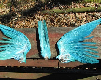 Teal blue green dyed pigeon dove wings feathers