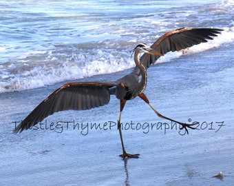Great Blue Heron fishing - 5x7 photographic art print
