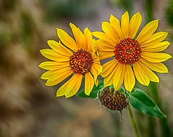 Yellow Wildflowers, Blank Note card with Envelope, Paper and Party Supplies, Photo Greeting Cards, Notecards, Photo Note Cards, Note Cards