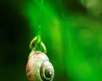 Tiny Snail on a blade of grass