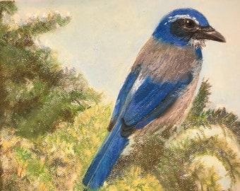 Original pastel painting, bird