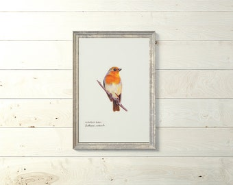 Printable Art Birds- European Robin- Printable Art - Birds