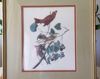Framed Finch Print
