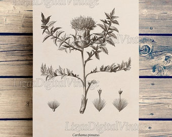 Floral print, Floral clipart, Thistle, Safflower, Botanical printable illustration, Digital art print, Vintage print 8x10, 11x14, A3 JPG PNG