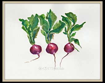 Three Radishes In Watercolor Print - Kitchen decor, Food Art, Original Watercolor, Botanical Art, Vegetable Garden Art
