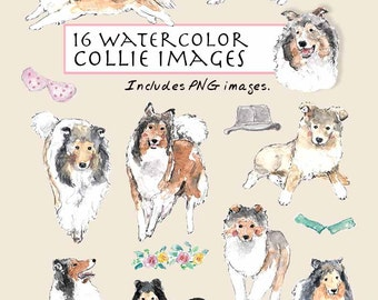 CLIP ART- Watercolor Collie Set. 16 Images. Digital Download. Animals. Doggy. Pets. Dog Smile. Puppy.