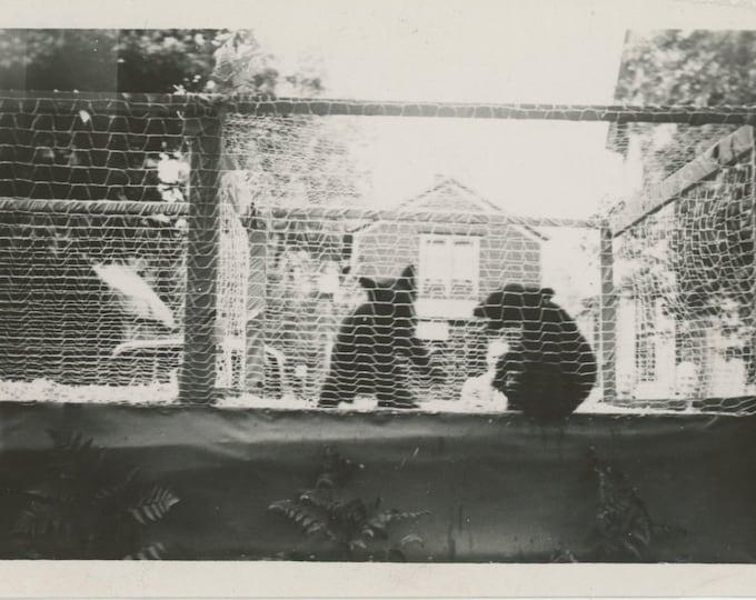 Vintage Snapshot Photo: Backyard Bears [86684]