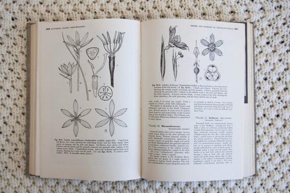 Attractive Klassifizierung Von Pflanzen Arbeitsblatt Motif ...