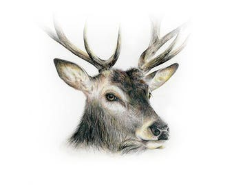 Deer Print, Deer Watercolor, Deer Art, Animal Art, Deer Painting, Forest Animals, Forest Print, Nature Artwork, Woodland, Psalms