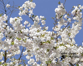 Digital Download White Spring Flower Photo Print, Botanical, Flower Photography