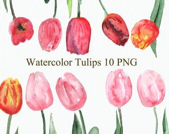 10 Watercolor Tulips Clip Art (clipart)