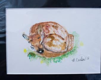 Sleeping doe watercolor, matted, 5x7