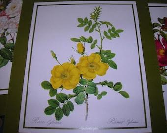 1982 Aspelia Art GAlleries, Ltd 705-1 Roses